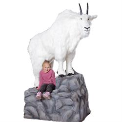 "Display - 86"" Mountain Goat on Rock"