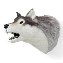 Display - Wall Hanging Wolf Head