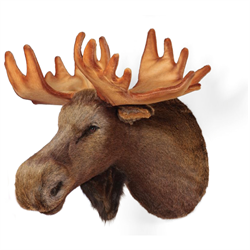 Display - Wall Hanging Moose Head
