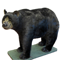 Display - Walking Natural Black Bear