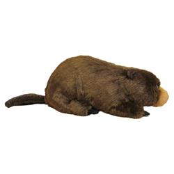 "36"" Natural Beaver"