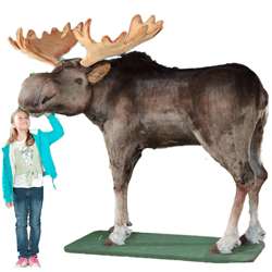 Display - Lifesize Bull Moose