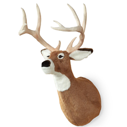 Display - Wall Hanging White Tailed Deer Head